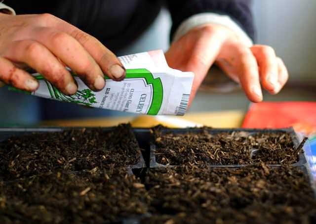 В середине апреля наступают оптимальные сроки для посева на рассаду большинства цветущих однолетников и многолетников