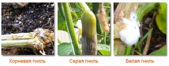 Справиться с гнилью растения помогут  готовые магазинные смеси, а также настои, сделанные своими руками