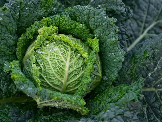 Если выращивание растения было проведено правильно, урожай будет богатым