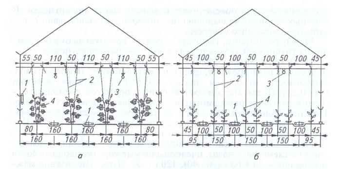 Перед началом посадки следует определить, на каком расстоянии удобнее расположить растения в вашей теплице