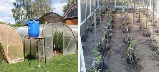 «Дуся» работает следующим образом: просто наполните бочку водой и она будет снабжать растения влагой в продолжение недели