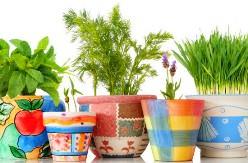 Выращивать зелень в домашних условиях абсолютно не сложно