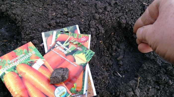 Можно успеть вырастить свеклу с морковью. Но сорта рекомендовано выбирать скороспелые
