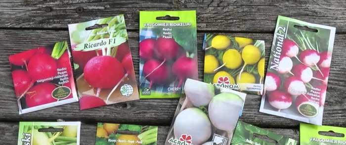 Редиска даст еще один урожай до заморозков. При этом она будет намного вкуснее, чем в середине лета, так как ближе к осени солнечные лучи становятся мягче, что улучшает вкусовые качества редиса