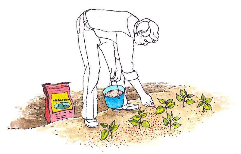 Самой ранней весной вносятся азотные удобрения