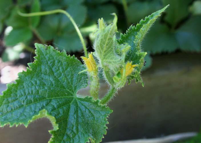 Непротравленные семена – это тоже фактор риска! В данном случае возникают инфекции, которые быстро перебираются в почву