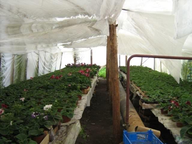 Буржуйка для теплицы, сделанная своими руками, является бюджетным и эффективным способом повышения урожая и защиты его от холода