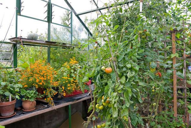 Компактные культуры разрешается высаживать не вместо, а в дополнение к овощам