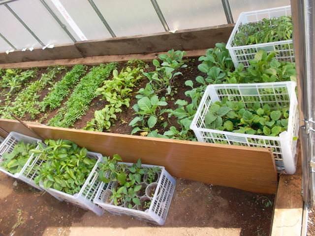 Рекомендуется располагать на одной грядке те растения, которые имеют одинаковые требования к поливу