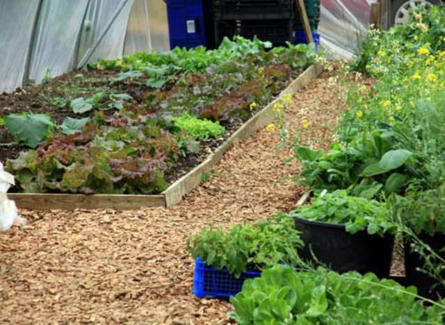 На одной грядке лучше высаживать овощи, требования которых к свету и питанию различны