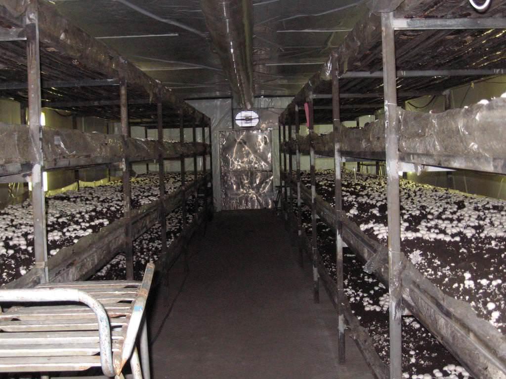 При низкой температуре рост грибов замедляется