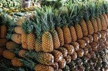 kak-rast-ananas-7