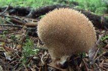 Mushroom-raincoat2