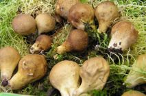 Mushroom-raincoat3