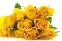 yellow-roses13
