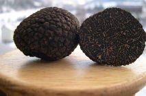 truffle10