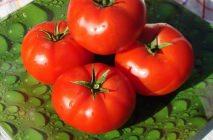 tomato-16