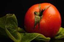 tomato-17