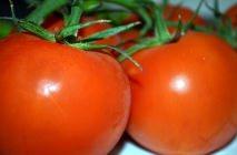 tomato-18