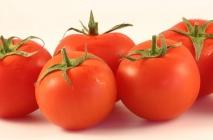 tomato-19
