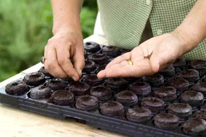 Семена земляники садовой можно высаживать в течение всего года