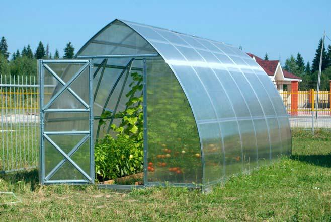 Для предотвращения скручивания листьев огурцов необходимо уделять пристальное внимание проветриваниям теплицы в жаркие и сухие дни