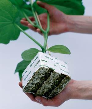 Минеральная вата является хорошей альтернативой почве