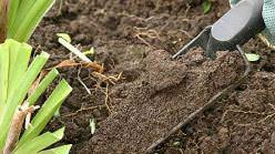 Оздоровление почвы в теплице является важным условием поддержания плодородности грунта