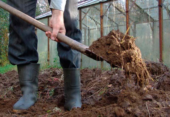 Заправка тепличного грунта, которая заключается в глубокой заделке удобрений на этапе перекопки в осенний период