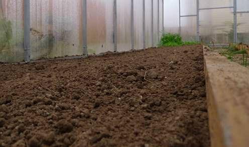 Для получения хорошего урожая менять грунт в теплице необходимо раз в 2 года