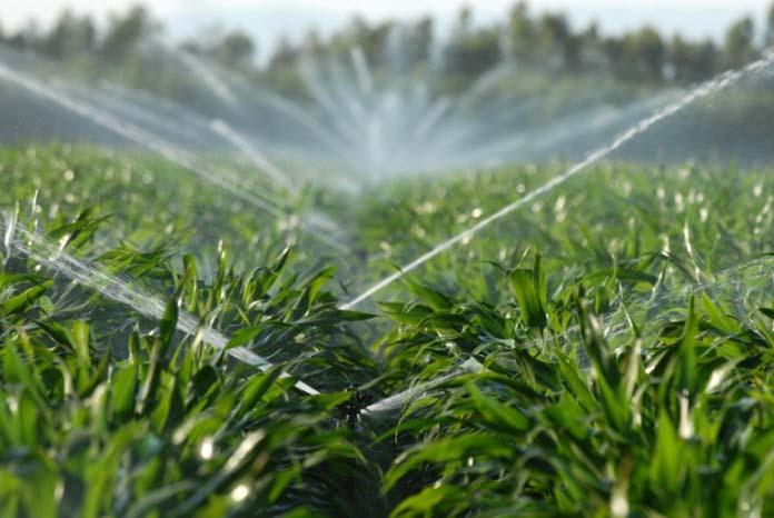 Спринклерное орошение способствует повышению влажности воздушных масс в приземных слоях, что позволяет при необходимости снизить температуру грунта