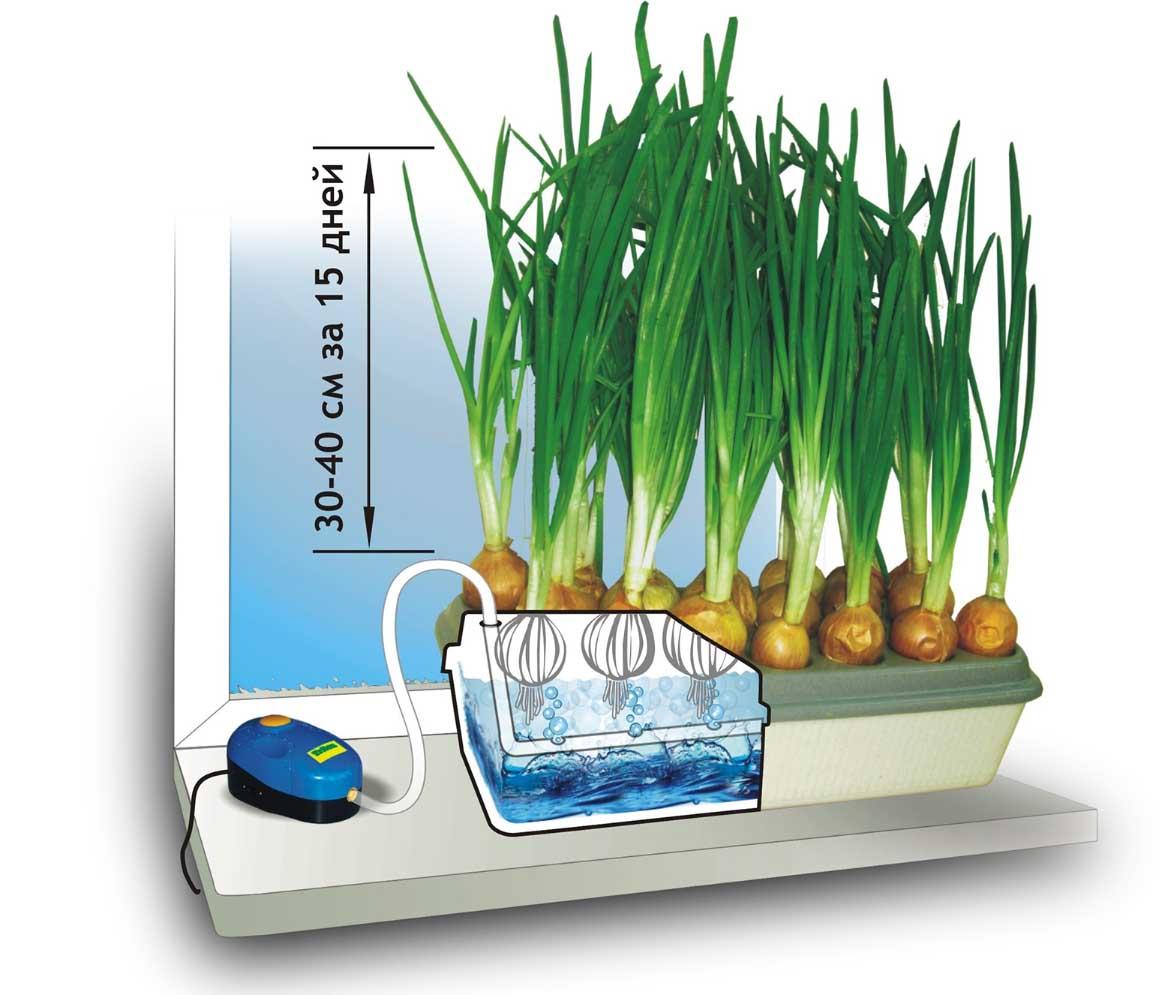 Гидропонная система – уникальный способ выращивания растений без применения почвы