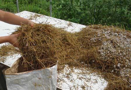 Для правильного приготовления субстрата, солома нуждается в гидротермической обработке