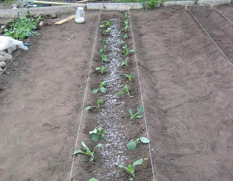 Посадка огорода и земледелие на узких грядах требует очень ответственного подхода, так как методика выращивания Митлайдера предполагает общую подготовку и планирование участка единожды