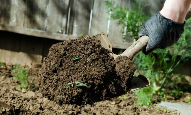 Основной метод проведения борьбы с гусеницей совки – это перекопка грунта ранней весной или осенью
