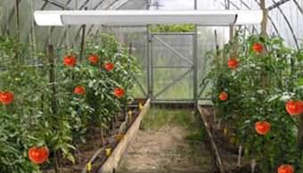 С появление ИК-обогрева возможности зимнего овощеводства существенно расширились