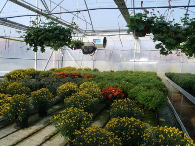 Возможен вариант ИК-обогрева теплицы не со стороны потолка, а снизу, так как отдельные виды ИК-пленки можно прокладывать в почве