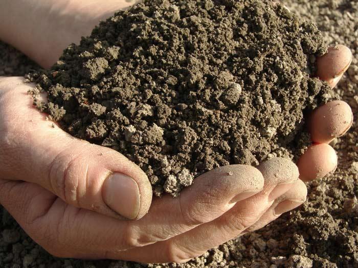 Овощи, которые выращиваются в квартире или теплице целый год, очень требовательны к грунту. В нем должны концентрироваться полезные микроэлементы, вещества и органика