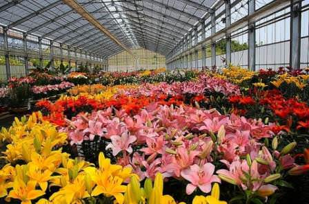 Растить цветы в теплице – благодарное занятие