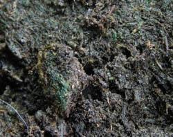 Зеленый грунт - вредное явление, так как снижается не только уровень роста растений, но и урожайность
