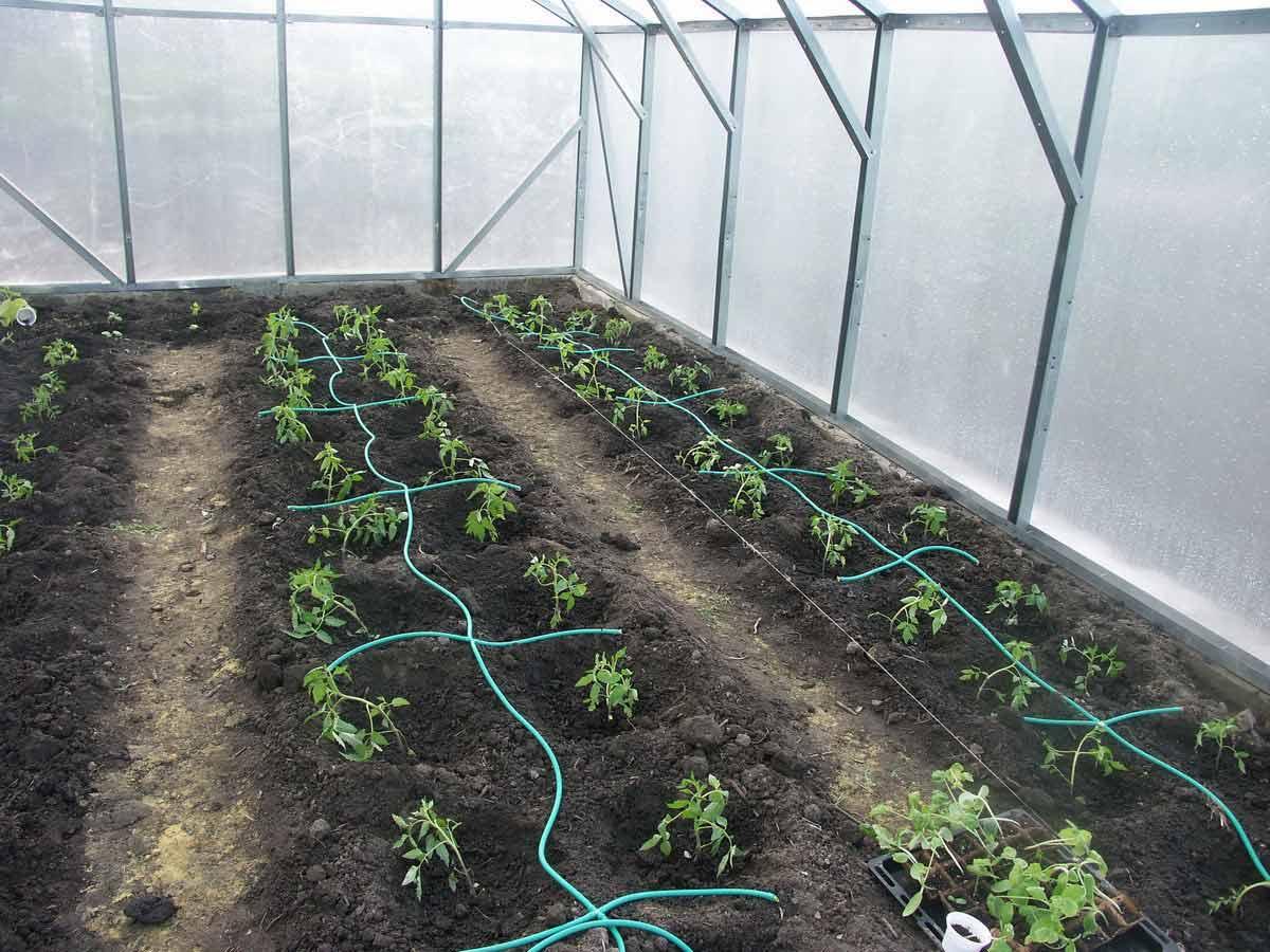Капельный полив относится к категории высокоэффективных систем с широкой сферой использования, позволяющих выполнять орошение гряд в открытом грунте или растений, выращиваемых в теплицах и парниках