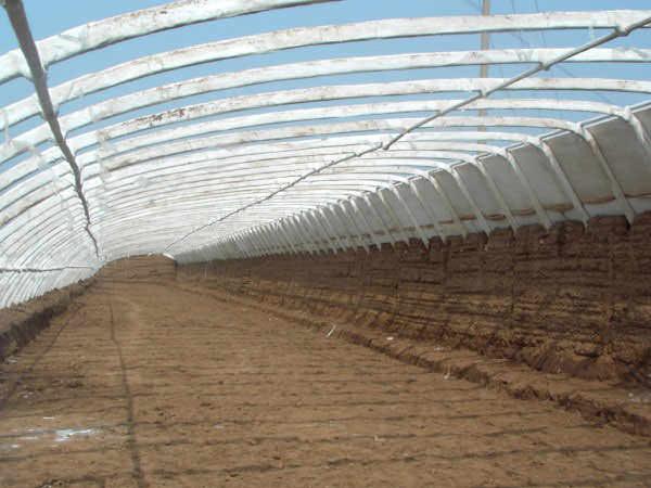 Особенность овощного изобилия кроется в широком применении современных технологических процессов, например, устройство тепличных хозяйств в условиях южных склонов, что позволяет использовать в качестве капитальной стены массивный почвенный пласт