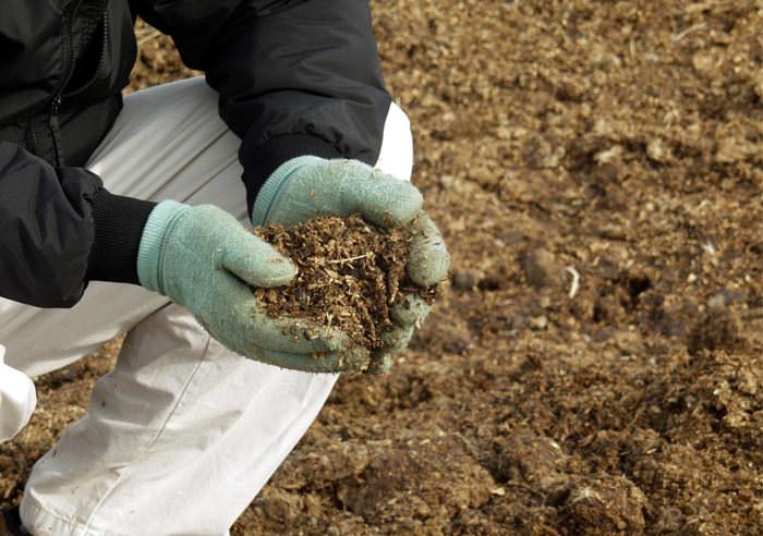 Использование куриного помета, коровняка и органических смесей в качестве подкормки для перцев, выращиваемых в теплице, не будет лишним