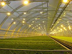 Освещение для современных теплиц относится к очень важным факторам, оказывающим непосредственное влияние на здоровье выращиваемых растений