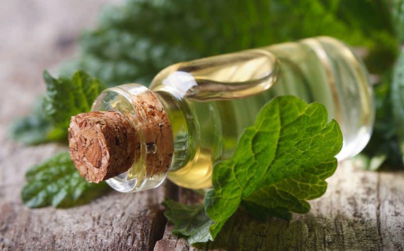 В народной медицине мелисса используется для приготовления чая