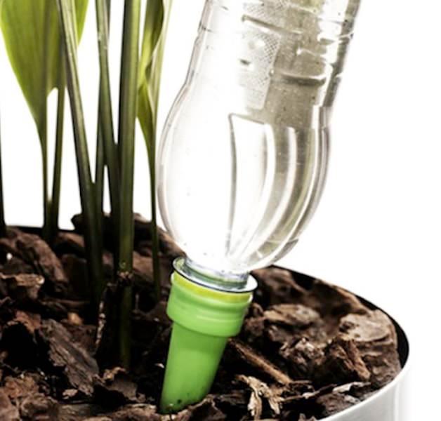 Поливать сансевиерию нужно аккуратно по краю горшка после того, как просохнет верхний слой почвы