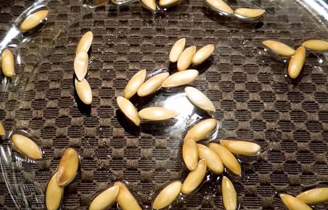 Перед высадкой семена замачивают либо в специальном растворе, активизирующем их рост, либо в воде, в которую добавлены борная кислота и цинк сернокислый