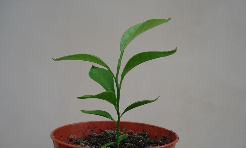 Молодые растения нужно поливать часто