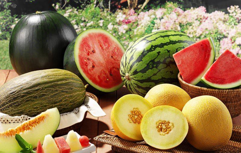 Арбузы и дыни также хорошо отзываются на дрожжевое питание