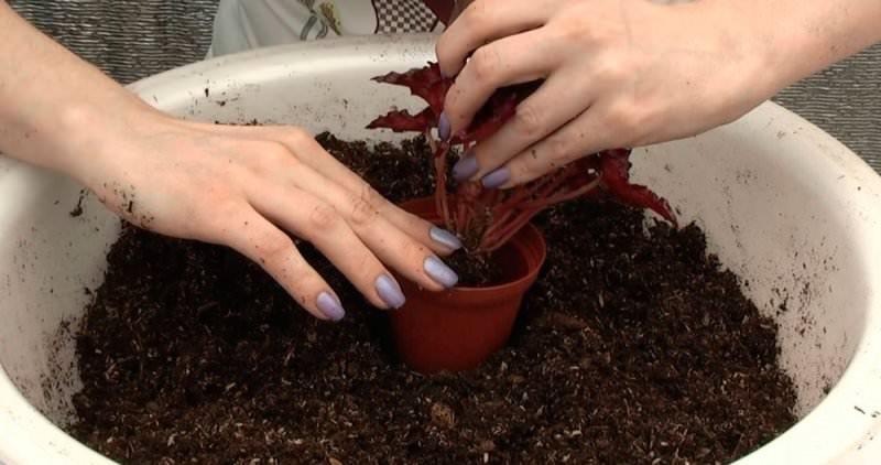 Грунт важно приготовить правильно, от этого будет зависеть рост и здоровье растения